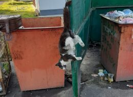 вбита кішка