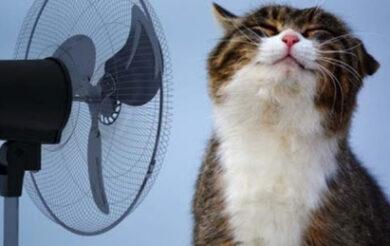 На Черкащину насувається спека