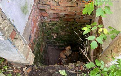 Впав до ями: на Черкащині з двометрової глибини підняли собаку (Фото)