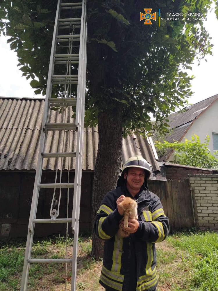 рятувальник тримає кошеня