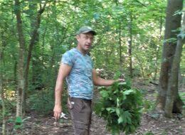 лісів