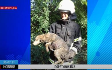 У Звенигородці рятувальники витягли пса з колодязя (ВІДЕО)