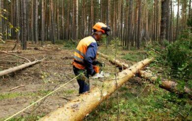 валка ліс