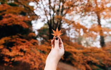 осінь листя