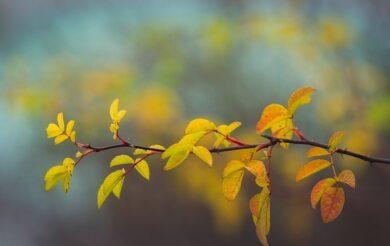 хмарно осінь природа погода