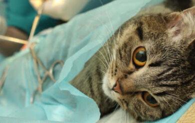 Стерилізувати котів у Черкасах за 1 млн грн поки що не будуть