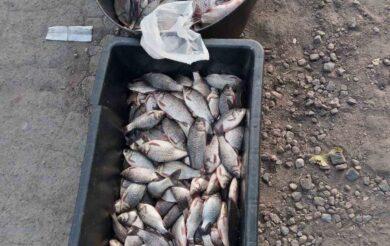 На Уманщині незаконно продавали 20 кг карася