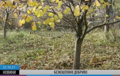 Мінімум затрат і енергії: черкащанка знайшла власний спосіб утилізації опалого листя (ВІДЕО)